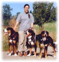 grössten schweizer sennenhund